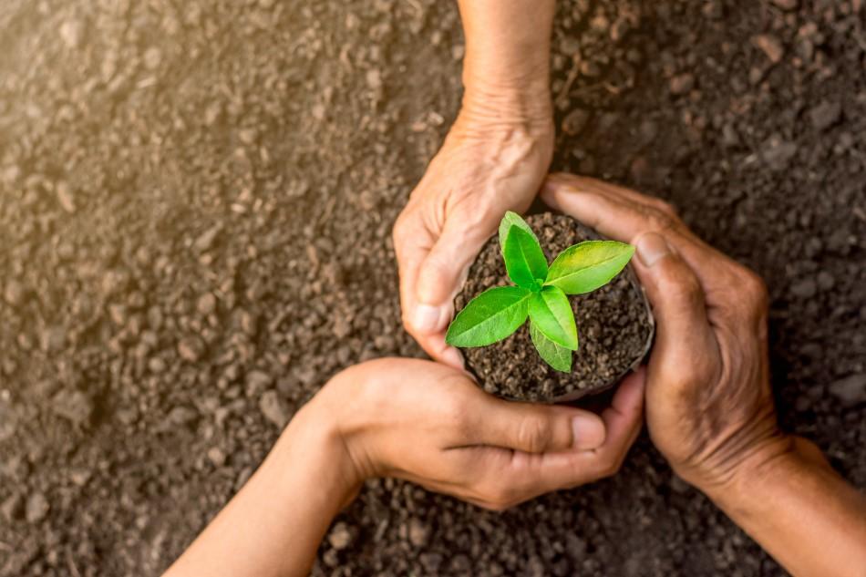 three-hands-holding-seedlings-growing-in-soil